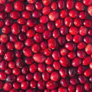 Cranberry Pilgram