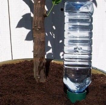 Drinks Bottle Watering Spike