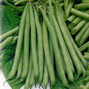 Dwarf French Green Beans Tendergreen (10 Plants) Organic