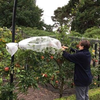 Fruit Tree Sleeves
