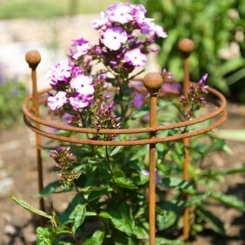 Harrod Short Circular Plant Support - Rust