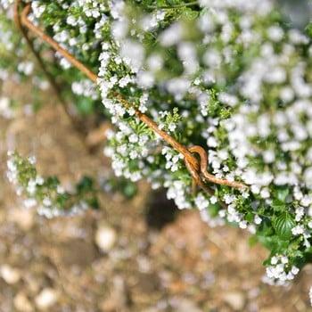 Harrod Straight Link Stakes Rust