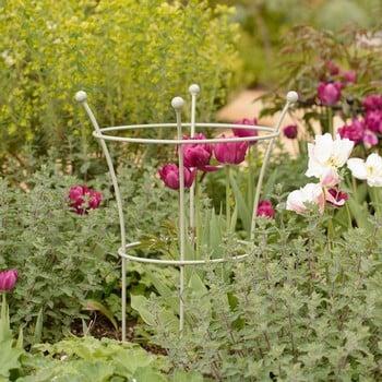 Harrod Trumpet Peony Plant Support - Lichen Green