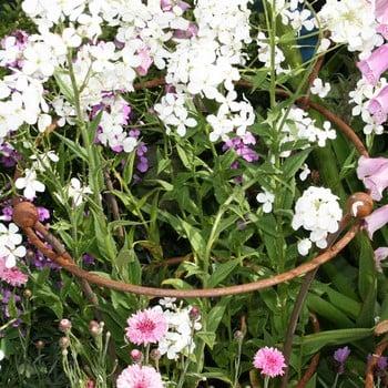 Harrod Trumpet Peony Plant Support - Rust