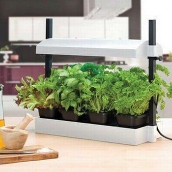 Herb And Salad Growing Kit Harrod