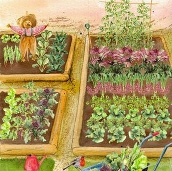 Large Vegetable Patch