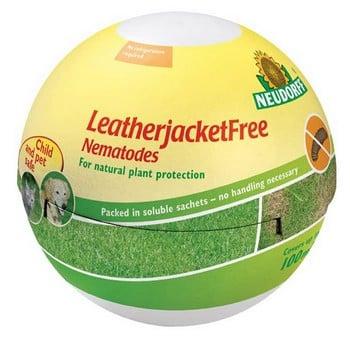 LeatherjacketFree Nematodes