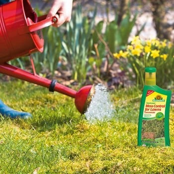 Organic Moss Control for Lawns