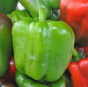 Pepper and Chilli Collection (12 plants) Organic
