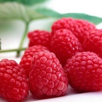 Raspberry Tadmor (pack of 6 canes)