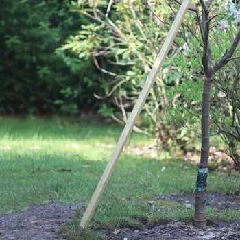 Redwood Plant/Tree Stakes 25mm sq x 1.2m Long 5 Pack
