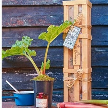 Rhubarb Crown and Jam Gardeners Gift Set