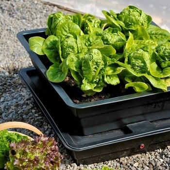Salad and Veg Planter