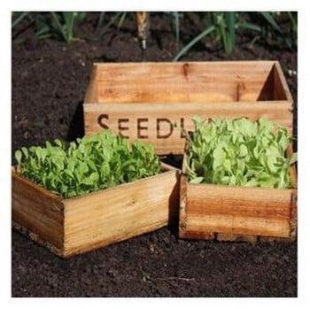 Seed Tray Set