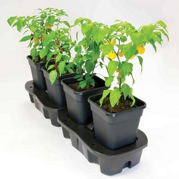 Self Watering Quadgrow Planter
