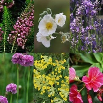 Small Perennial Collection Save 15%