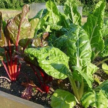 Superfoods Vegetable Garden