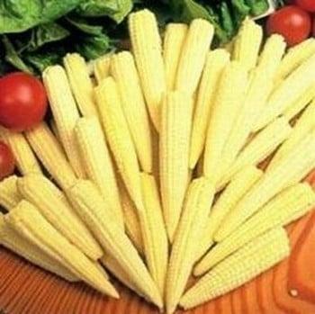 Sweetcorn Minipop (10 Plants) Organic