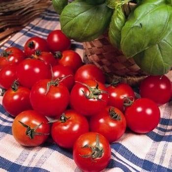 Tomato Gardeners Delight (5 Plants) Organic