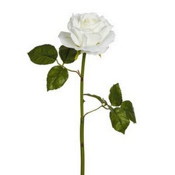 White Rose Stem by Sia