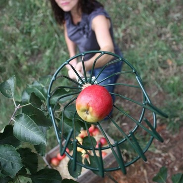 Apple Picker