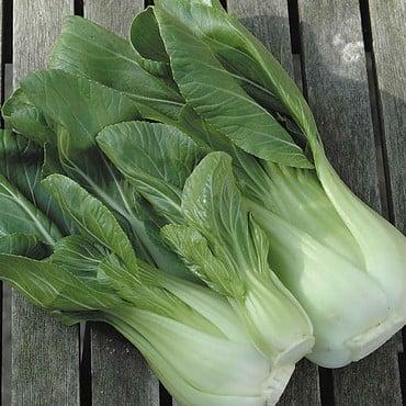 Autumn - Pak Choi Hanakan (10 Plants) Organic