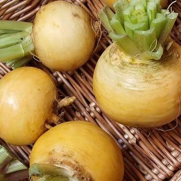 Autumn - Turnip Golden Ball