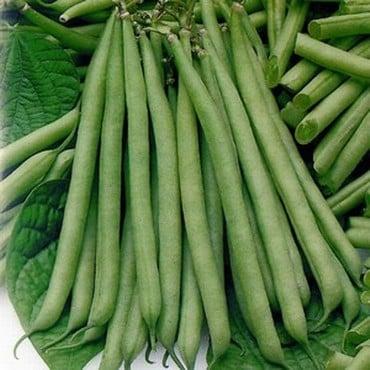 Dwarf French Green Beans Tendergreen (10 Plants) Organic