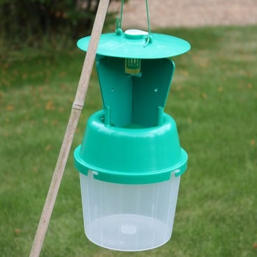 Garden Chafer Beetle Trap