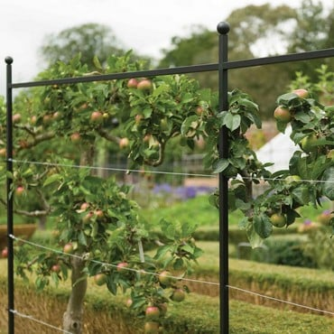 Harrod Espalier Growing Frame