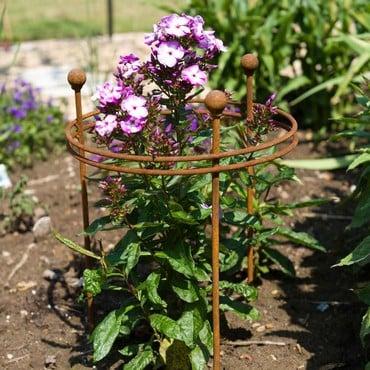Harrod Short Circular Plant Support - Rust