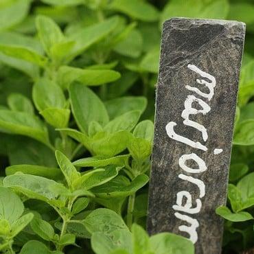 Marjoram (3 Plants) Organic