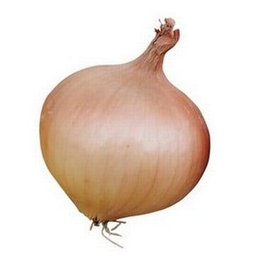 Onion Bedfordshire Champion (20 Plants) Organic