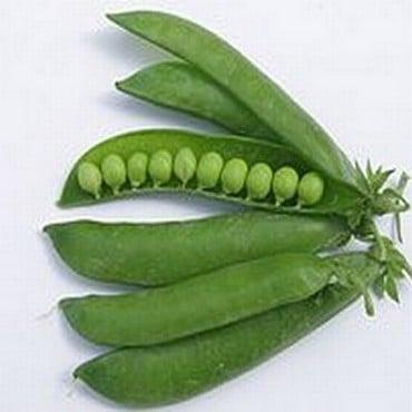 Peas Kelvedon Wonder (10 Plants) Organic