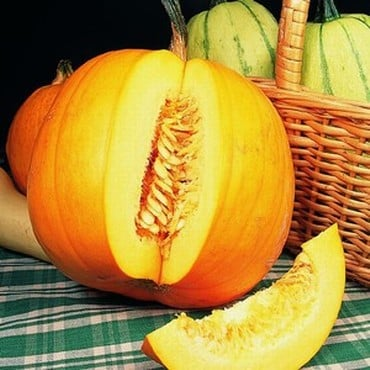 Pumpkins Jack O'lantern (3 Plants) Organic