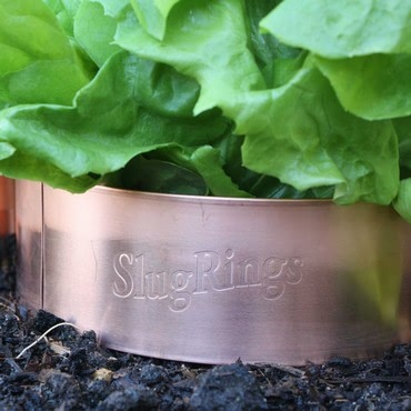 Slug Copper Rings (large)