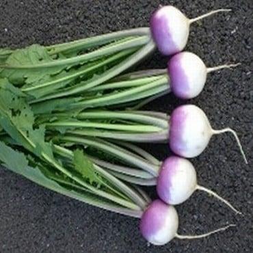 Turnip Sweetbell (10 Plants) Organic