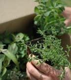 Gardening -  Harrod Horticultural