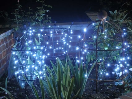 Trumpet Plant Supports & Lobster Pot Plant Supports with Christmas Lights