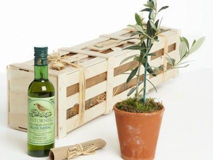 Plant Gift Sets