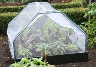 Cloches & Cold Frames