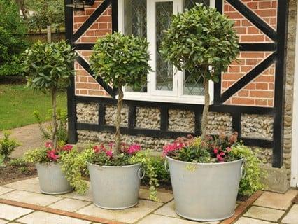 Decorative Planters & Pots
