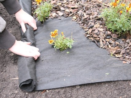 Ground Cover & Weed Control