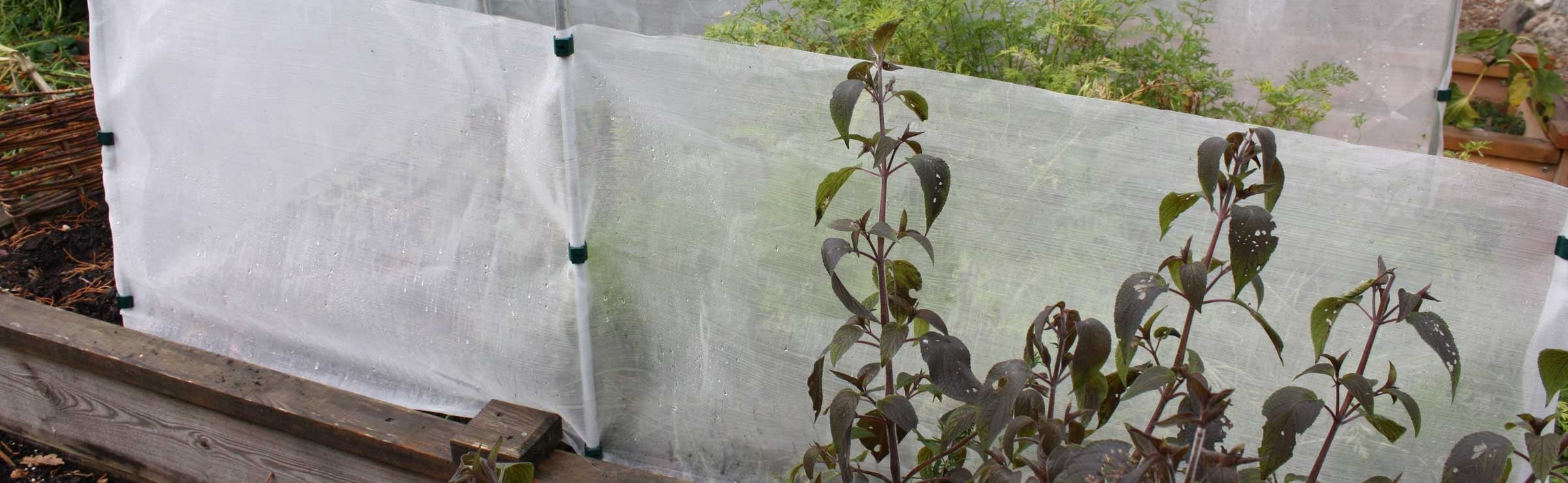 Insect Traps, Barriers & Sprays
