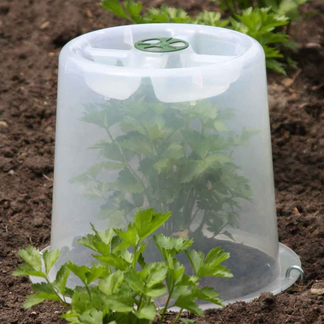Plant Cloches