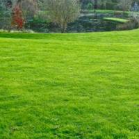 Autumn-Lawn-Care-Feed-070716