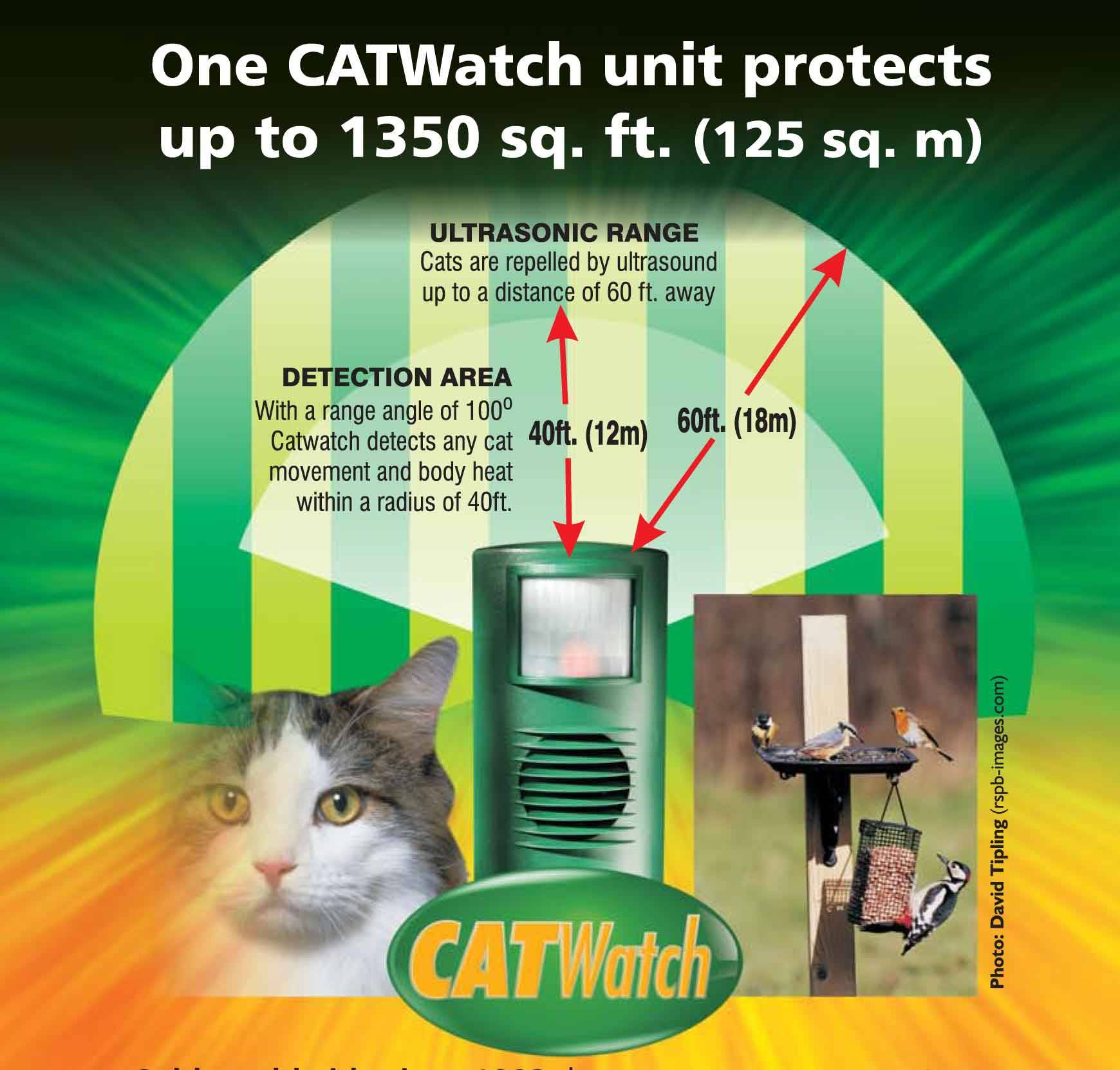 Catwatch Infographic