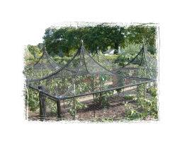 Steel Fruit Cage at RHS Wisley