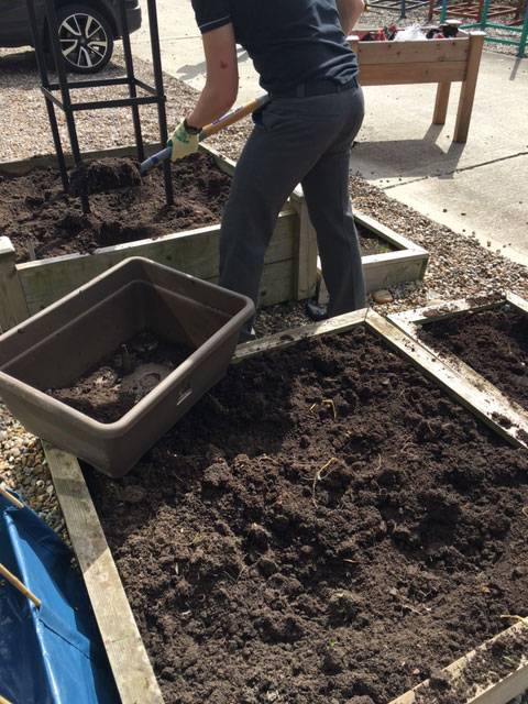 Filling Raised Beds 2