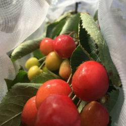 Inside-Fruit-Tree-Sleeves